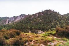 Landschap met moutains en bos, tiltshift mening Stock Foto
