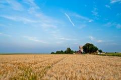 Landschap met moutgebied Royalty-vrije Stock Afbeelding