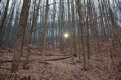 Landschap met naakt bos met zonnestraal royalty-vrije stock afbeeldingen