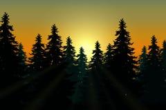 Landschap met naaldbos met zonneschijn vector illustratie