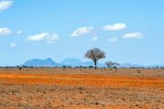 Landschap met niemand boom in Afrika stock afbeelding