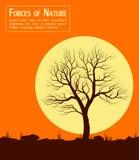 Landschap met oude boom over zon Stock Foto's