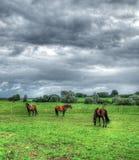 Landschap met paarden Royalty-vrije Stock Afbeeldingen