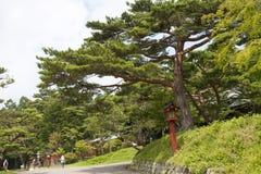 Landschap met pijnboom Royalty-vrije Stock Fotografie