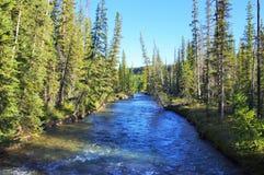 Landschap met pijnboombomen in bergen en een rivier vooraan het stromen aan meer Stock Foto's