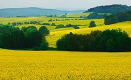 Landschap met raapzaadbloemen Royalty-vrije Stock Afbeelding