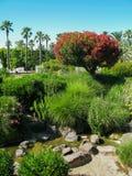 Landschap met rododendron in het park, Nice, Frankrijk royalty-vrije stock foto's