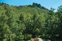 Landschap met rotsachtige die klippen door struiken en bos worden behandeld stock afbeeldingen