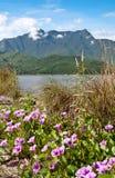 Landschap met roze bloemen Stock Foto