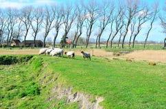 Landschap met schapen in Vlaanderen, België stock afbeelding