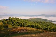 Landschap met schapenbijlage Stock Foto