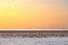 Landschap met sneeuw behandelde gebieden Stock Afbeeldingen