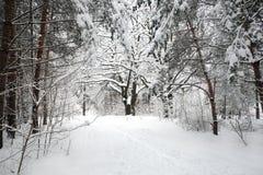 Landschap met snow-covered weg op de rand van de bos en bevroren rivier op een bewolkt de winter dayBeautiful landschap met eiken Stock Fotografie