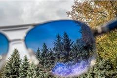 Landschap met sparren over zonnebril Royalty-vrije Stock Afbeelding