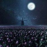 Landschap met sterren, maan en bloemen stock afbeeldingen