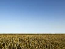 Landschap met tarwegebied Stock Fotografie