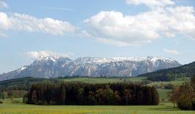 Landschap met tot bloei komende alpiene weiden met groen gras en bergen met sneeuwkappen bij ver weg stock afbeelding
