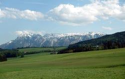 Landschap met tot bloei komende alpiene weiden met groen gras en bergen met sneeuwkappen bij ver weg stock foto's