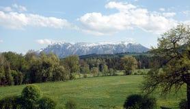Landschap met tot bloei komende alpiene weiden met groen gras en bergen met sneeuwkappen bij ver weg royalty-vrije stock afbeeldingen
