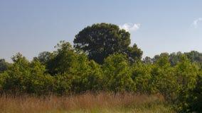 Landschap met van de Sterke drankboom en Bosbes Struiken stock fotografie
