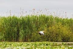 Landschap met verschillende vogels in de Delta van Donau Stock Foto's