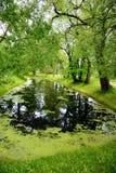 Landschap met vijver Royalty-vrije Stock Afbeeldingen