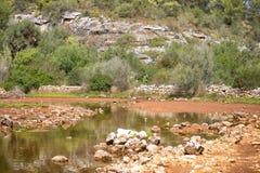 Landschap met Vijver Stock Afbeeldingen