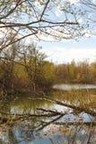 Landschap met vijver en gebroken boom Stock Foto's