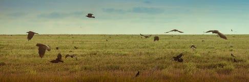 Landschap met vliegende vogels bij hemel Stock Fotografie