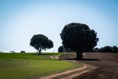 Landschap met weg in kromme stock afbeeldingen
