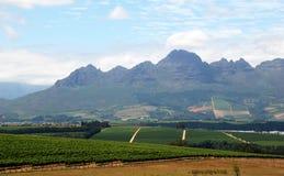 Landschap met wijngaard Royalty-vrije Stock Fotografie