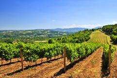 Landschap met wijngaard Royalty-vrije Stock Afbeelding