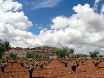 Landschap met wijngaarden Stock Foto's