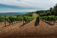 Landschap met wijngaarden en heuvels Royalty-vrije Stock Afbeelding