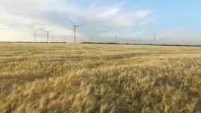 Landschap met windmolens en tarwe tijdens duidelijk zonnig weer Luchtonderzoek Sluit omhoog stock video