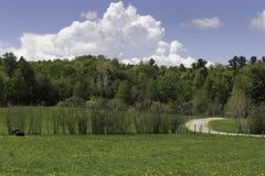 Landschap met wolken en bomen Royalty-vrije Stock Foto
