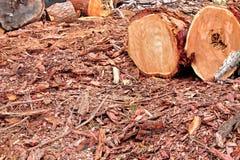 Landschap met woodpile Royalty-vrije Stock Afbeelding