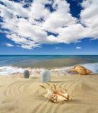 Landschap met zeeschelp en stenen op achtergrond Stock Afbeelding