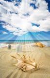 Landschap met zeeschelp en stenen op achtergrond Royalty-vrije Stock Afbeelding
