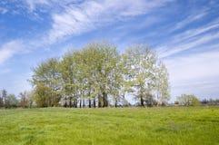 Landschap met zilverachtige populieren. Stock Foto