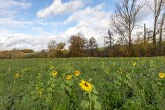 Landschap met zonnebloemenwolken en blauwe hemel stock foto