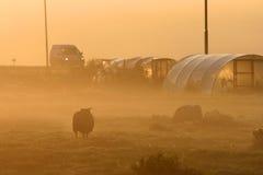 Landschap in mist stock foto