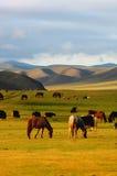Landschap in Mongolië Stock Foto