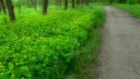 Landschap mooie weide in het hout in het park met bloemen en groen gras Zacht nadrukonduidelijk beeld stock video