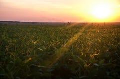 Landschap, mooie zonnige zonsondergang op een gebied Stock Fotografie