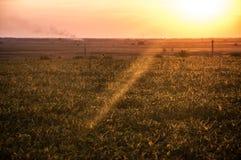 Landschap, mooie zonnige zonsondergang op een gebied Stock Afbeelding