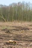 Landschap na de landopheldering van een bosgebied en de vernietiging van een habitat van dieren en planten royalty-vrije stock foto's