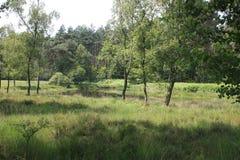 Landschap in Nederlands Limburg Stock Afbeeldingen