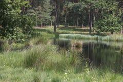 Landschap in Nederlands Limburg Royalty-vrije Stock Foto's