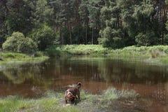 Landschap in Nederlands Limburg met huisdier Stock Foto